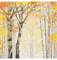 birch grove in autumn time vector image
