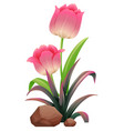 pink tulips on white background vector image vector image