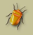 Yellow beetle vector image vector image