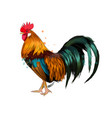 cock from a splash watercolor colored drawing vector image vector image