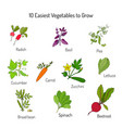 easiest vegetables to grow vector image vector image