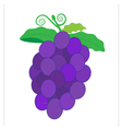 Fruit grape vector image