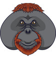 cartoon orangutan head mascot vector image