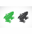frogs design on white background amphibian vector image vector image