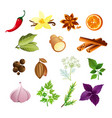 set of herbs and spices in vector image vector image