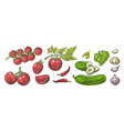 cucumbers garlic chili and tomato - whole half vector image vector image