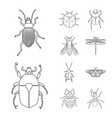 design of insect and fly logo set of vector image vector image