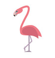 exotic animal swan vector image vector image