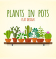 Flat cactuses and home plantas concept