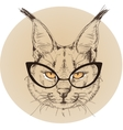 hipster portrait of bobcat with glasses vector image vector image