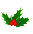 traditional christmas holly leaves and berries vector image vector image