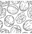 walnut nuts pattern on white background vector image vector image