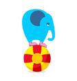 Blue elephant on ball Performing Circus animal Sad vector image
