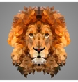 Lion low poly portrait vector image vector image