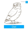 Owl bird learn birds coloring book vector image