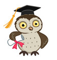 owl in graduation cap cartoon vector image