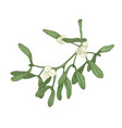 realistic detailed drawing mistletoe sprig vector image vector image
