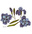set hand drawn colored iris vector image