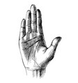 sketched palm hand vector image vector image