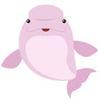 pink beluga whale on white background vector image