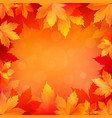 autumn fall background with bright golden maple vector image vector image