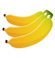 bananas bunch isolated on vector image