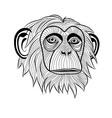 monkey chimpanzee ape head animal