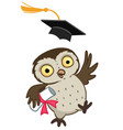 owl graduate vector image vector image