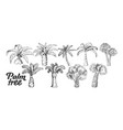 palm high and small trunk trees set ink vector image vector image