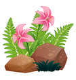 pink lily flowers and rocks on white background vector image vector image