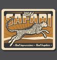safari cheetah or leopard hunting poster vector image vector image