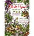 sketch poster of spices and herbs food vector image vector image