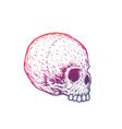 skull art t-shirt print on white vector image vector image