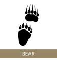 trace of animal bear