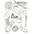 Outline set of fresh hand drawn vegetables vector image