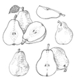 Ink pears sketches set vector image