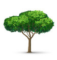 a tree with a dense crown and green leaves vector image vector image