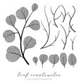 big collection branch and eucalyptus vector image vector image
