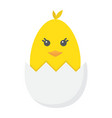 chick hatched from an egg flat icon easter vector image