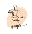 ginger sketch on watercolor paint hand drawn ink vector image vector image
