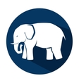 icon elephant design isolated vector image vector image