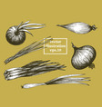 onion hand drawn set vintage vegetarian vector image