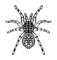 Zentangle stylized spider Sketch for tattoo or t vector image vector image