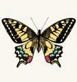 beautiful swallowtail butterfly vector image