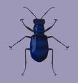 Blue beetle vector image vector image