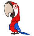 funny red parrot with a large beak vector image vector image