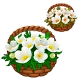 Beautiful bouquet of white flowers in straw basket vector image vector image