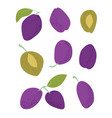 blue plums flat on white background flat vector image