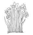coloring page collection flowers narcissus vector image vector image