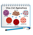 Diagram showing different stem cell applications vector image vector image